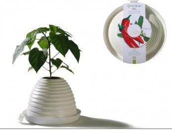 prato-planta-pratico