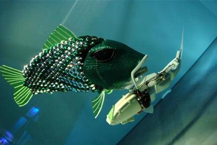 peixe-robo1